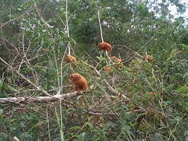 Reserva Mico Leão Dourado