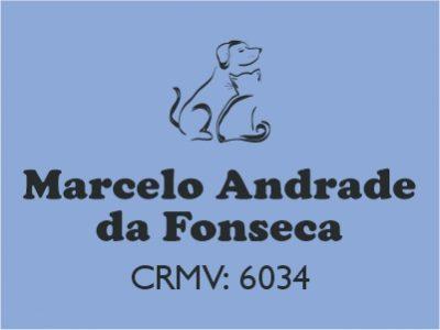Dr. Marcelo Fonseca